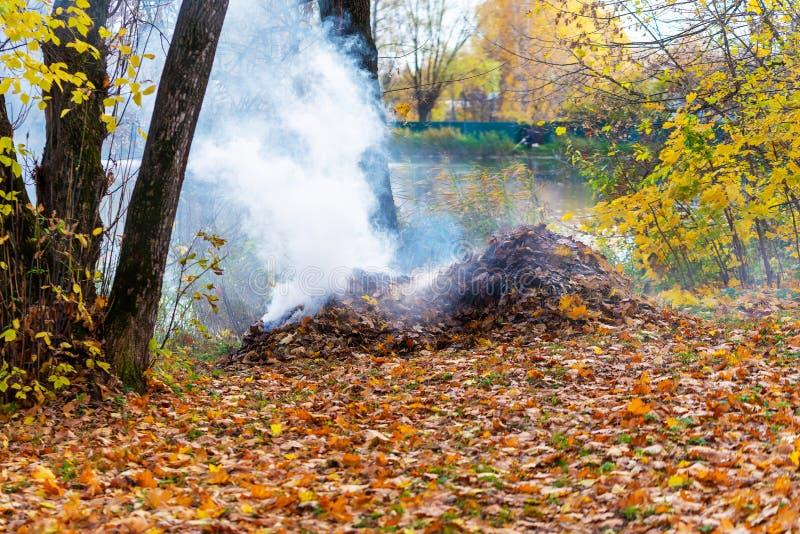 Rökning från förbränning av höstblad i parken Selektiv skärpa royaltyfria foton