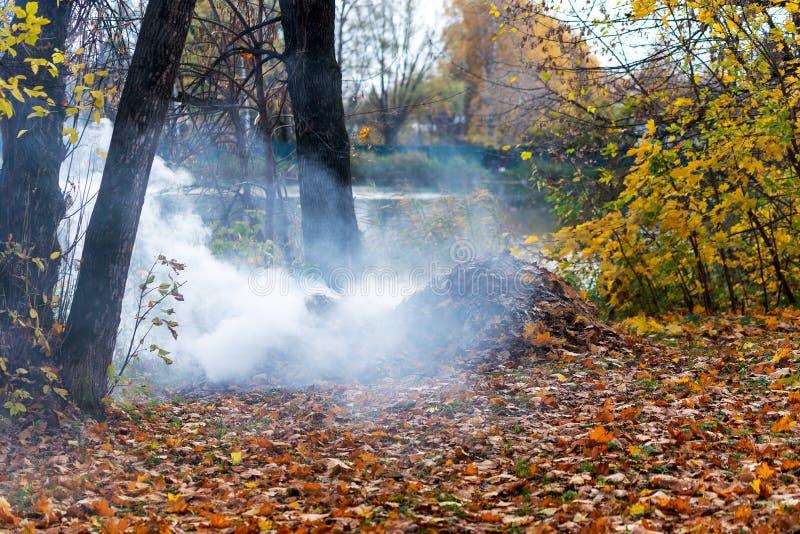 Rökning från förbränning av höstblad i parken Selektiv skärpa royaltyfria bilder