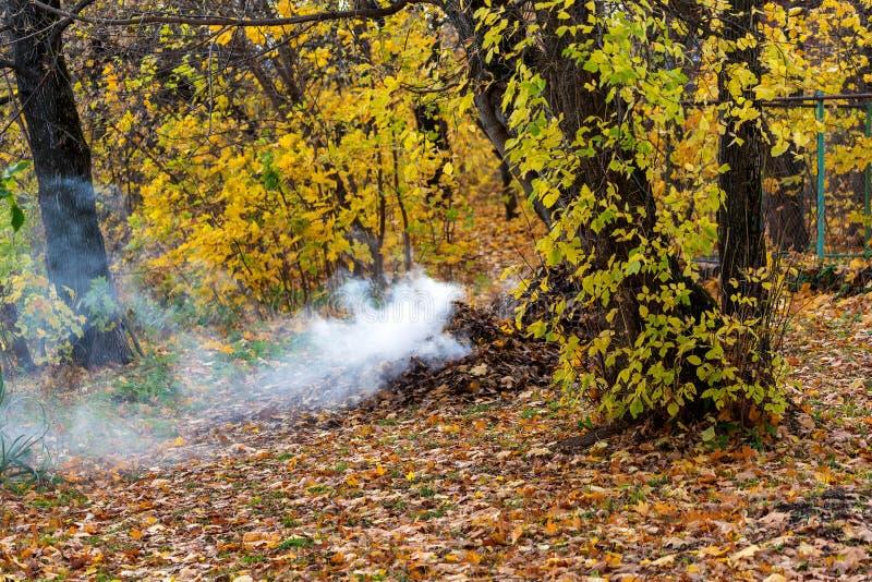 Rökning från förbränning av höstblad i parken Selektiv skärpa fotografering för bildbyråer