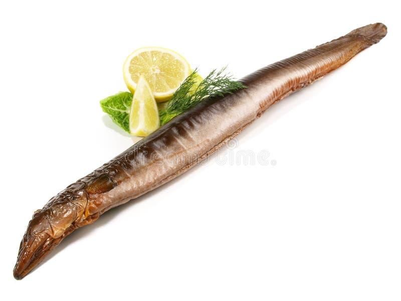 Rökt ål - hel fisk royaltyfri foto