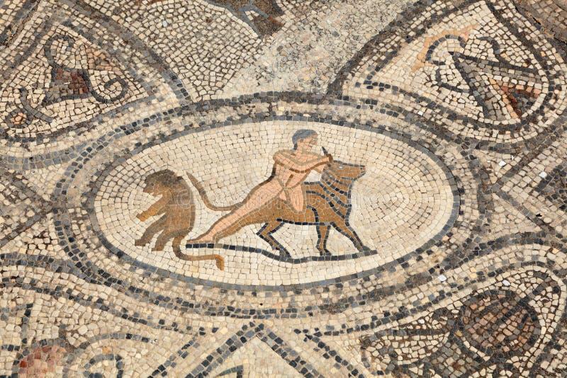 Römisches Mosaik in Volubilis lizenzfreie stockfotografie