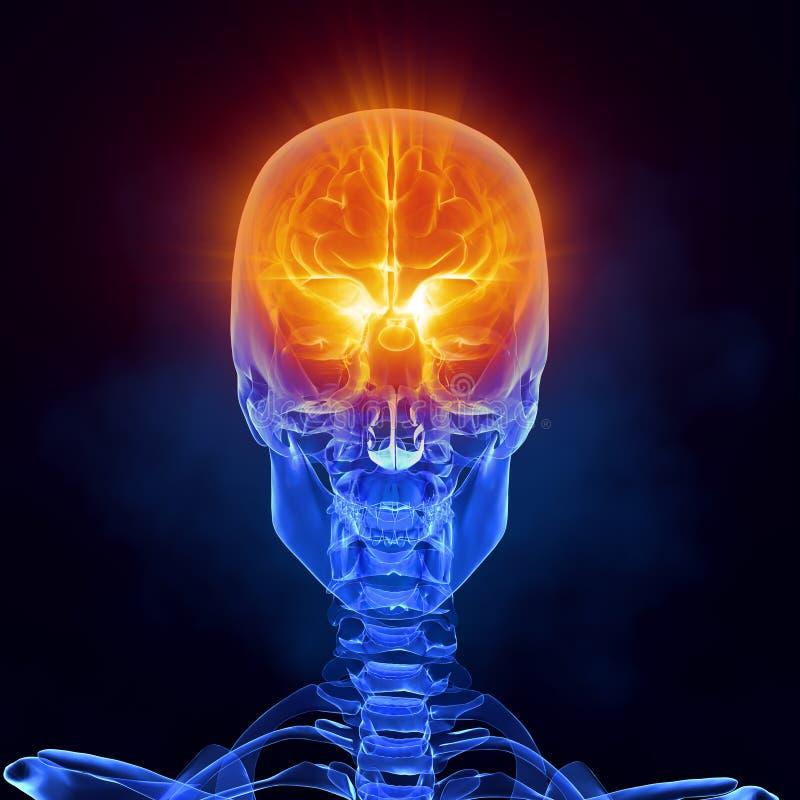 Röntgen Sie Vorderansicht des medizinischen Scans des Gehirns lizenzfreie abbildung