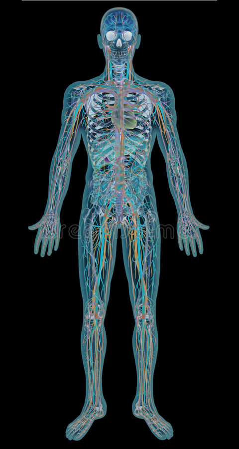 röntgenstråle royaltyfri illustrationer