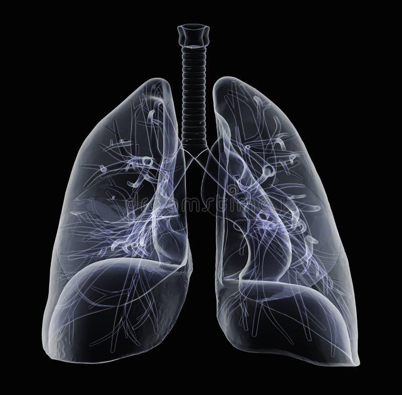 Röntgenstråle av mänskliga lungor stock illustrationer