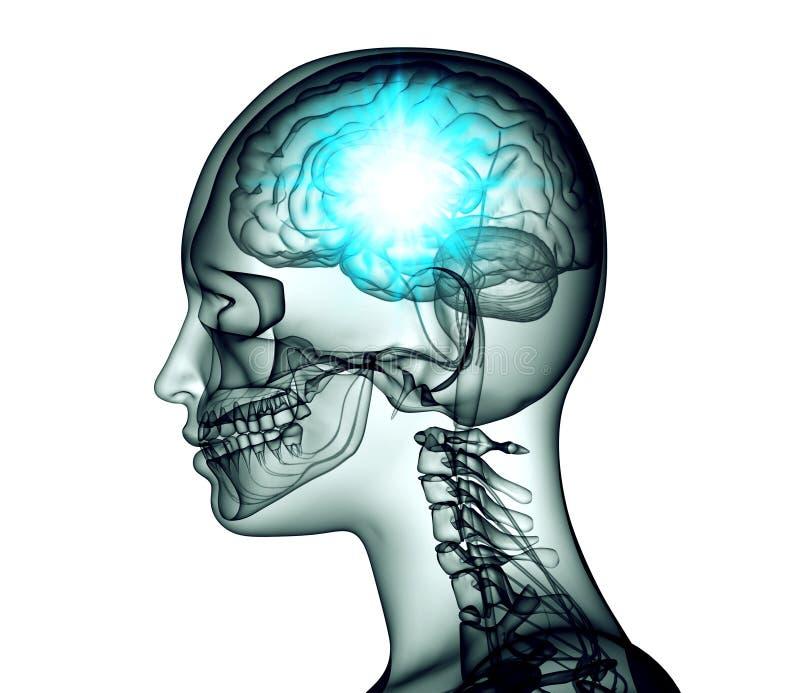 Röntgenstrålebilden av det mänskliga huvudet med hjärnan och elkraft pulserar royaltyfri illustrationer
