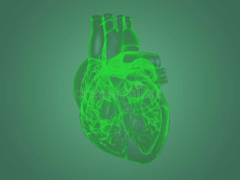 Röntgenstrålehjärtaanatomi royaltyfri illustrationer