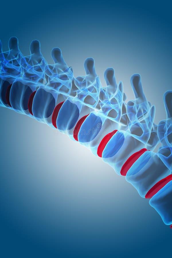 Röntgenstrålemänniskarygg royaltyfri illustrationer