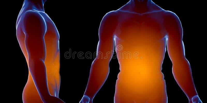 Röntgenstraal menselijk mannelijk lichaam Geïsoleerd op witte achtergrond 3d geef terug royalty-vrije illustratie