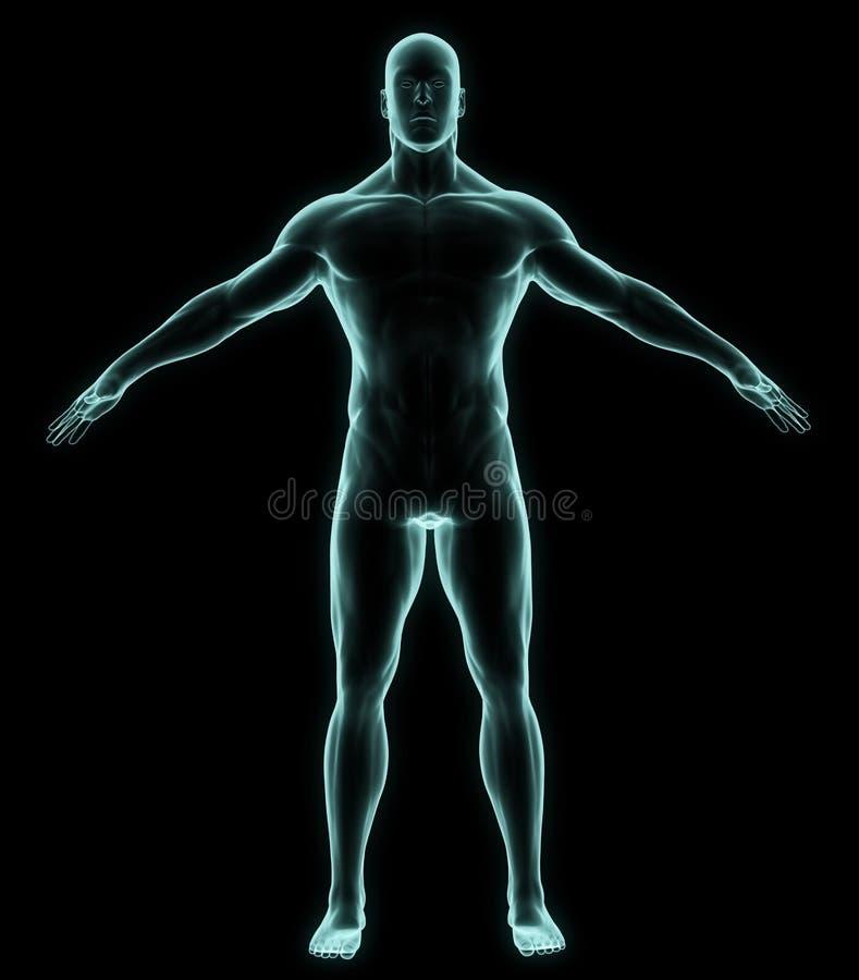 Röntgenstraal menselijk volledig lichaam vector illustratie