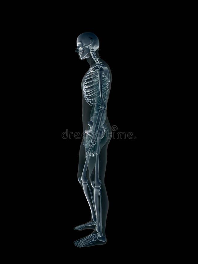 Röntgenstraal, x-ray van het menselijke mannelijke lichaam. stock illustratie