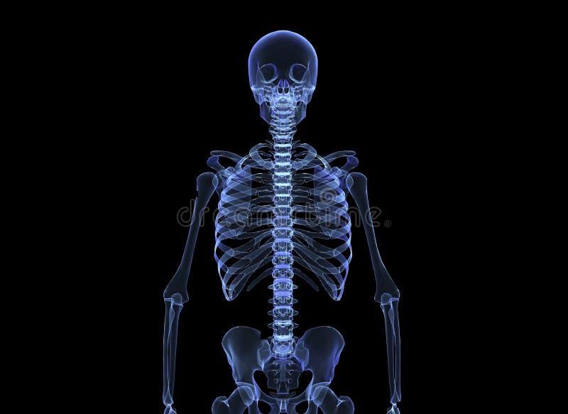 Röntgenstraal van het menselijke lichaam stock illustratie