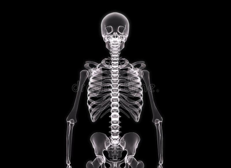 Röntgenstraal van het menselijke lichaam vector illustratie