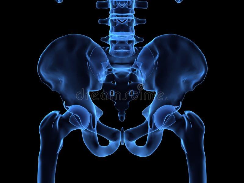 Röntgenstraal van menselijke heupen stock illustratie