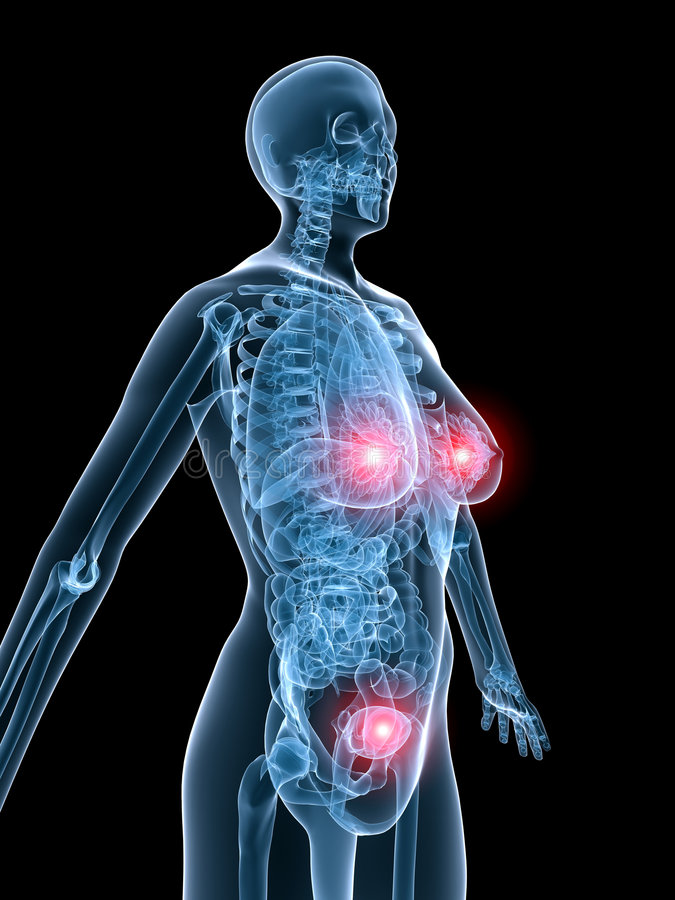 Röntgenstrahl anantomy-markierte Gebärmutter und Brust vektor abbildung