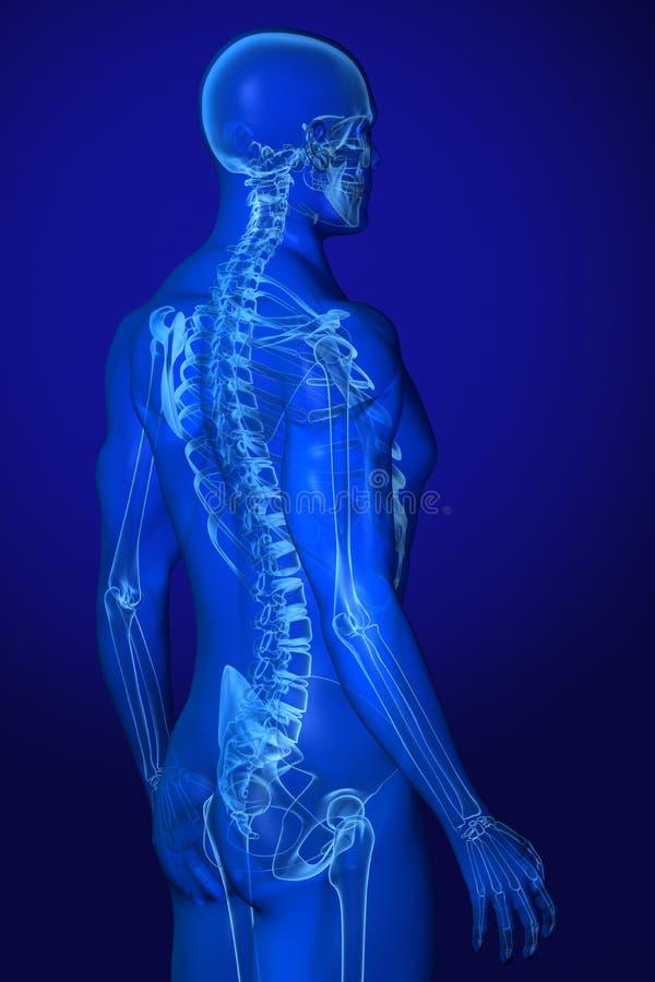 Röntgenstrahl-Anatomie auf Blau stock abbildung