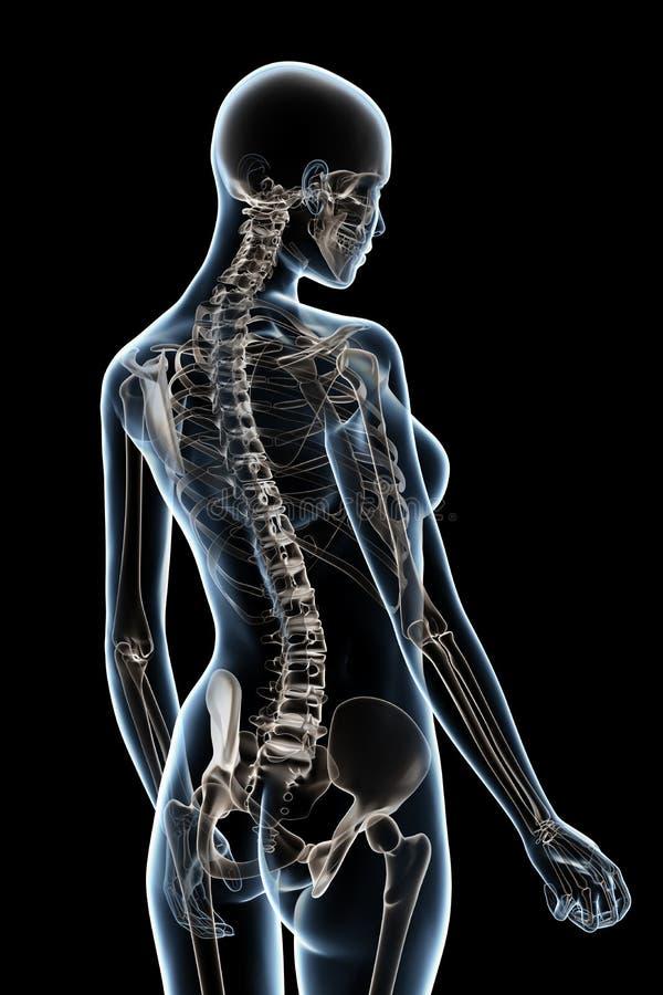 Röntgenstrahl-Anatomie auf Schwarzem vektor abbildung