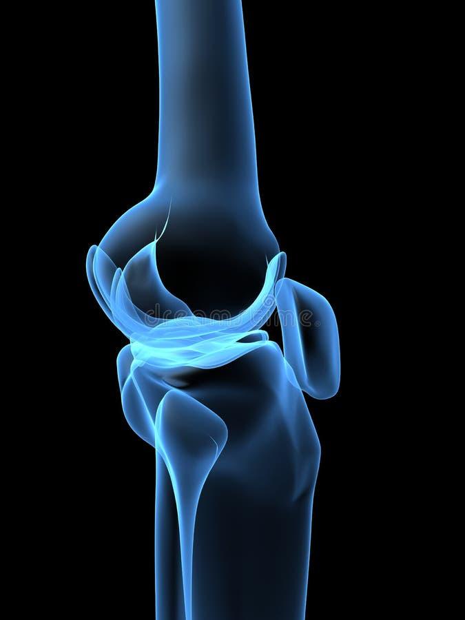 Röntgenstrahlknie stock abbildung