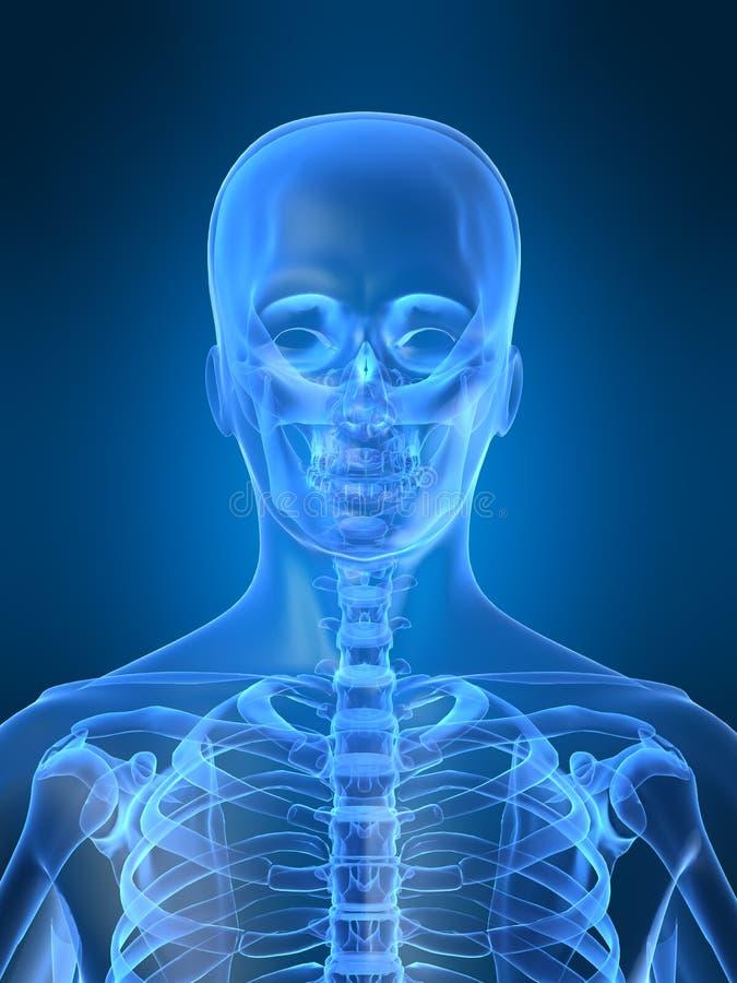 Röntgenstrahlkopf stock abbildung