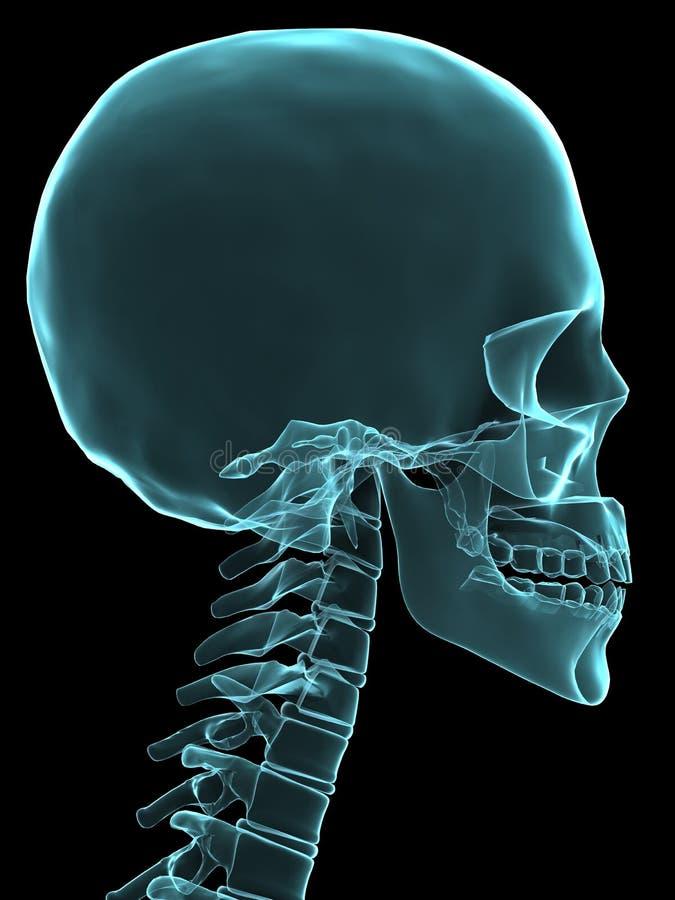 Röntgenstrahlkopf vektor abbildung
