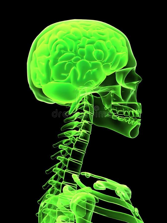 Röntgenstrahlkopf mit Gehirn vektor abbildung
