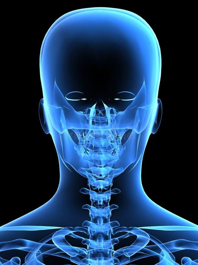 Röntgenstrahlkopf von der Rückseite stock abbildung