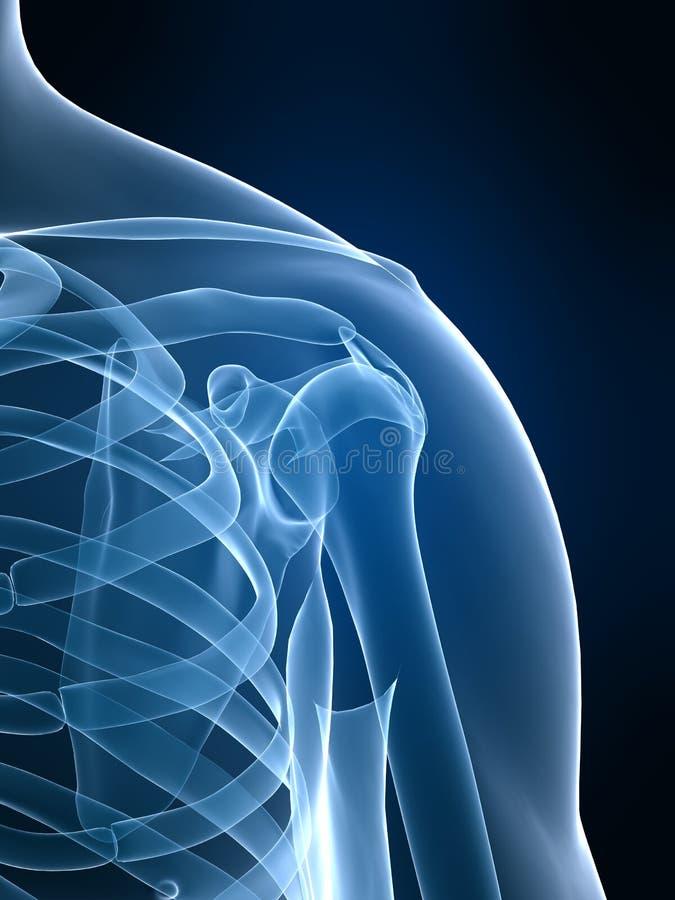Röntgenstrahlschulter lizenzfreie abbildung