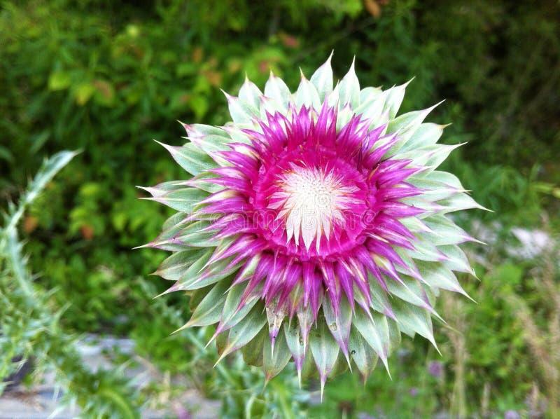 Röra sig i spiral blomman fotografering för bildbyråer
