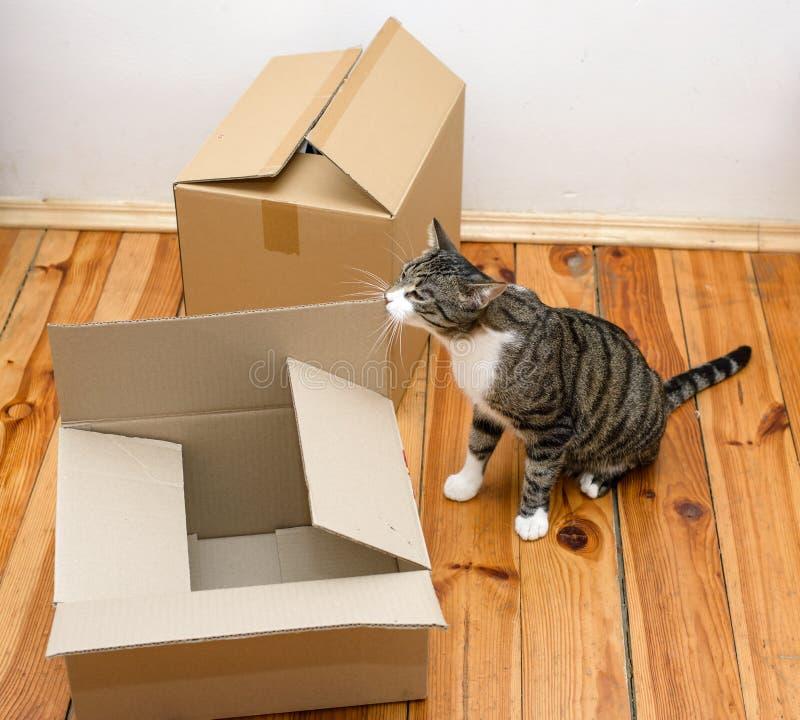 Rörande dag - katt och kartonger arkivbilder