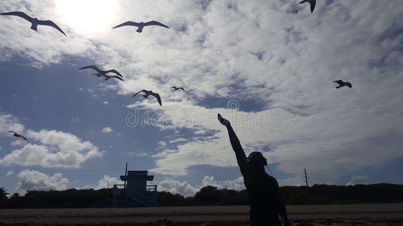 Rörande fåglar arkivbilder