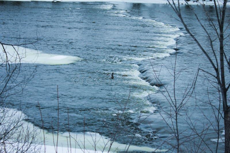 Rörande flod i vinter fotografering för bildbyråer