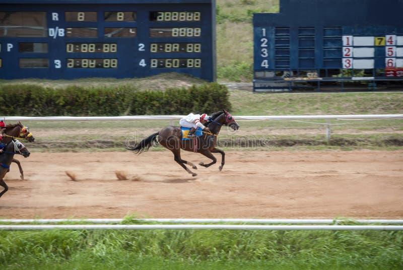 Rörelse av hästkapplöpningen för fullföljande royaltyfria foton