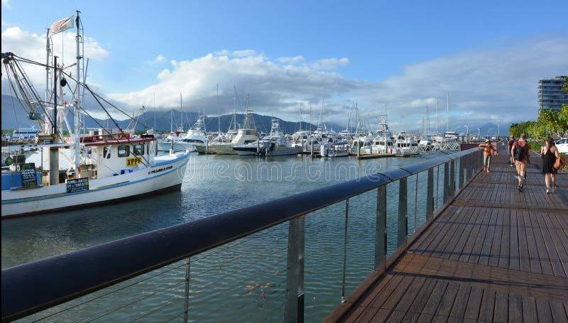 Rösen Marlin Marina I Queensland Australien arkivfoto