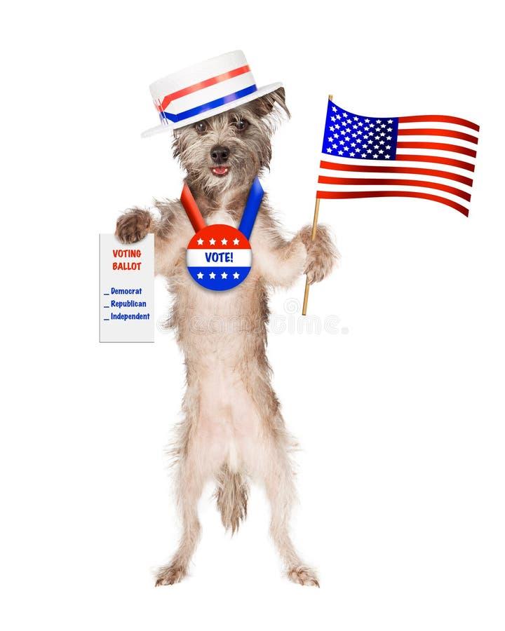 Röstar den bärande politikerhatten för den gulliga hunden och den hållande amerikanen för knappen arkivfoton