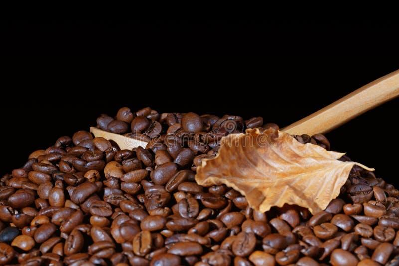 Röstkaffeebohnen mit einem hölzernen Schöpflöffel und einem trockenen Blatt lokalisiert lizenzfreies stockbild