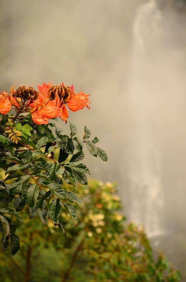Rötliche Blüten nahe schönem Wasserfall stockfoto