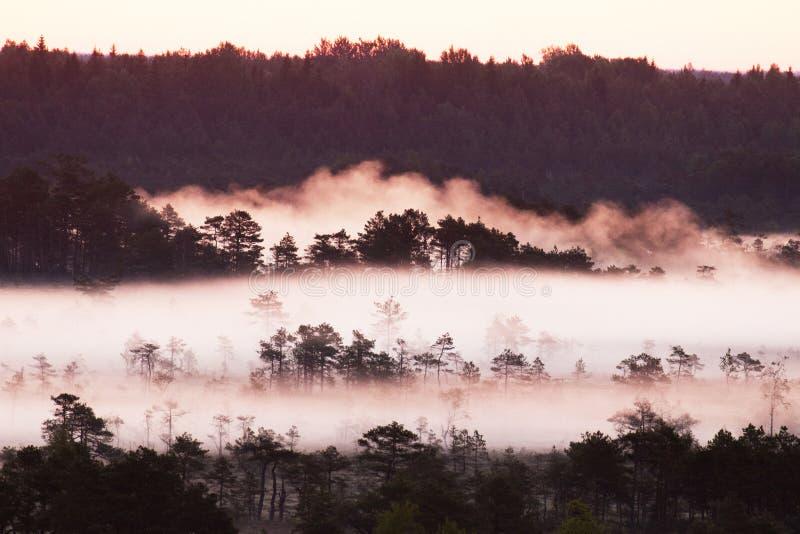 Rötlicher Sonnenaufgang in einem nebelhaften estnischen Sumpf lizenzfreie stockfotos
