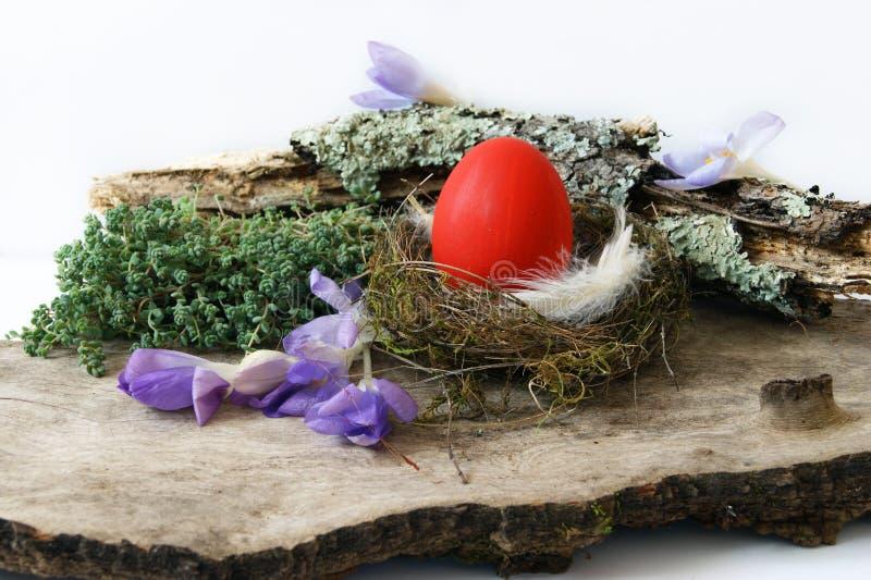 Rött ägg i rede och krokus fotografering för bildbyråer