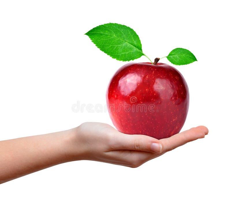 Rött äpple i hand royaltyfri fotografi