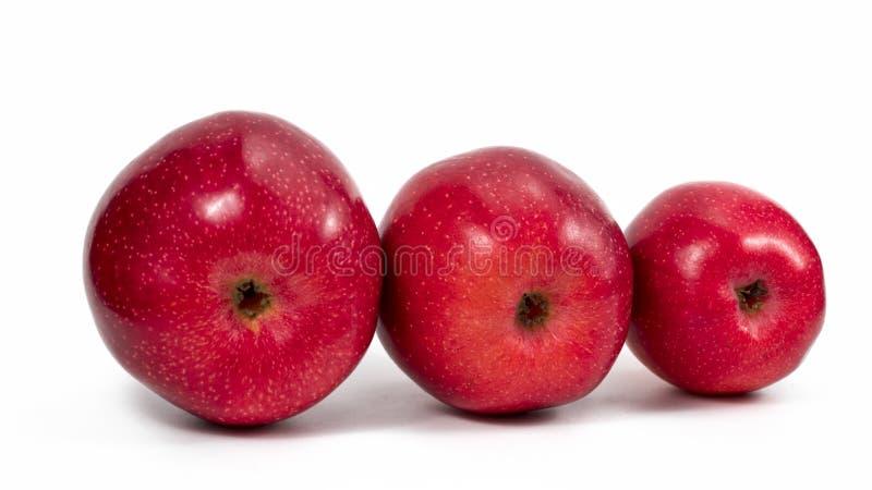 Rött äpple isolerat på vit bakgrund arkivfoton