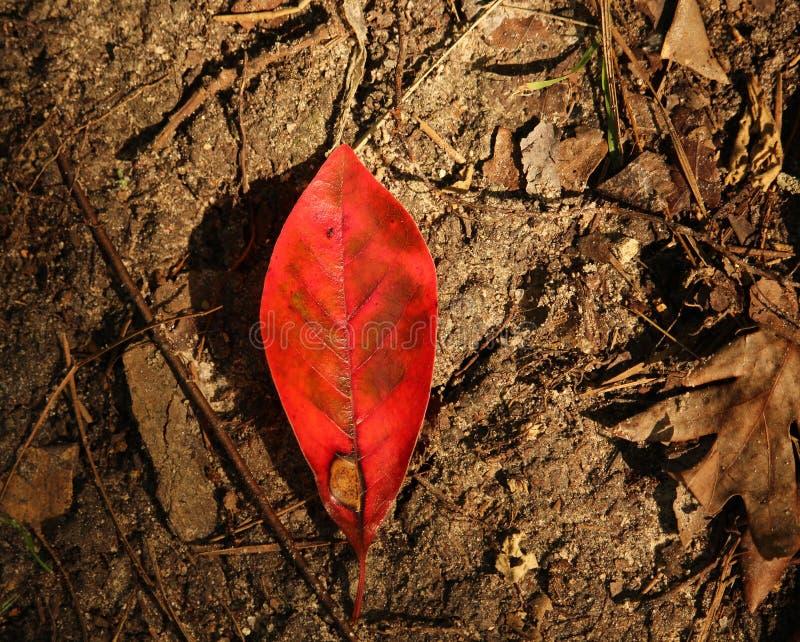 Rött blad på Forest Floor arkivfoto