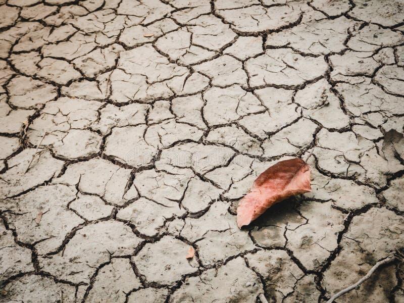 Rött blad på sprucken torr jord av ett kargt land fotografering för bildbyråer
