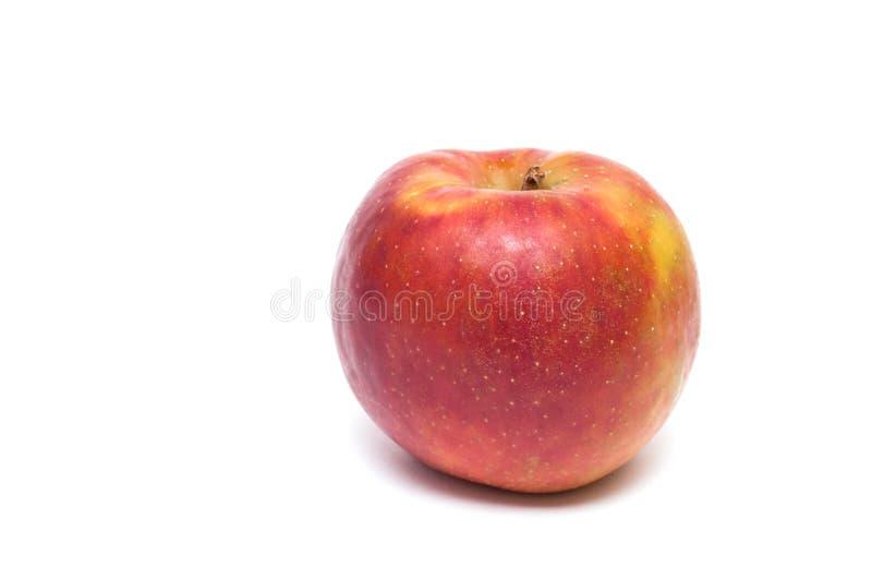 Rött boskoop äpple royaltyfria foton