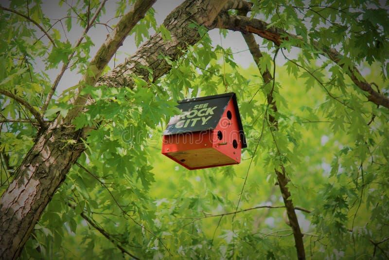 Rött fågelhus i Tennessee royaltyfri foto
