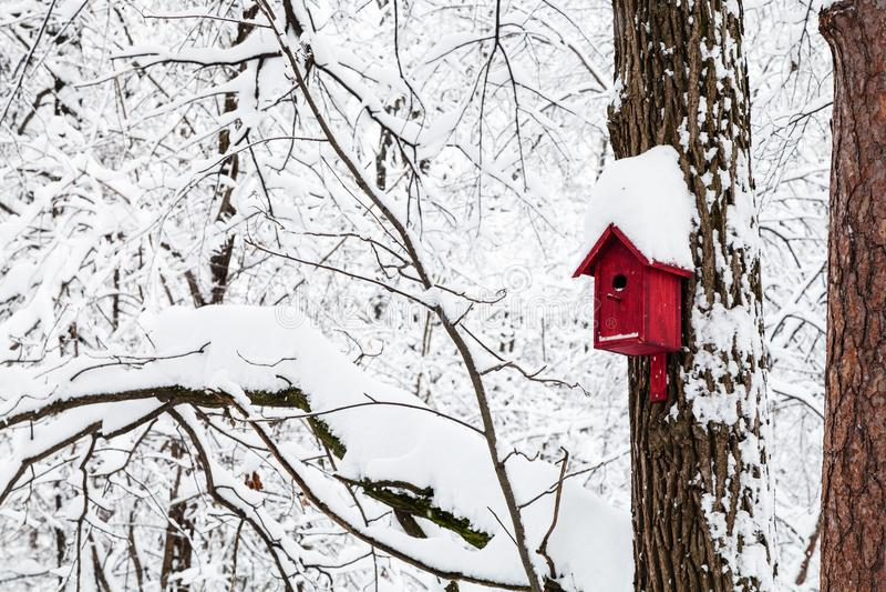 rött fågelhus i vinterskog royaltyfri fotografi