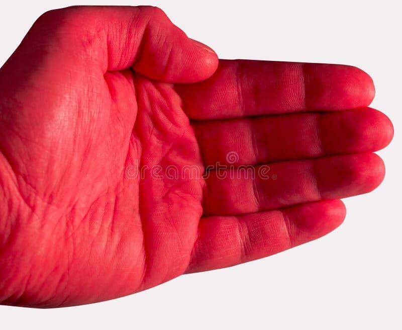Rött gömma i handflatan på vit bakgrund arkivfoton
