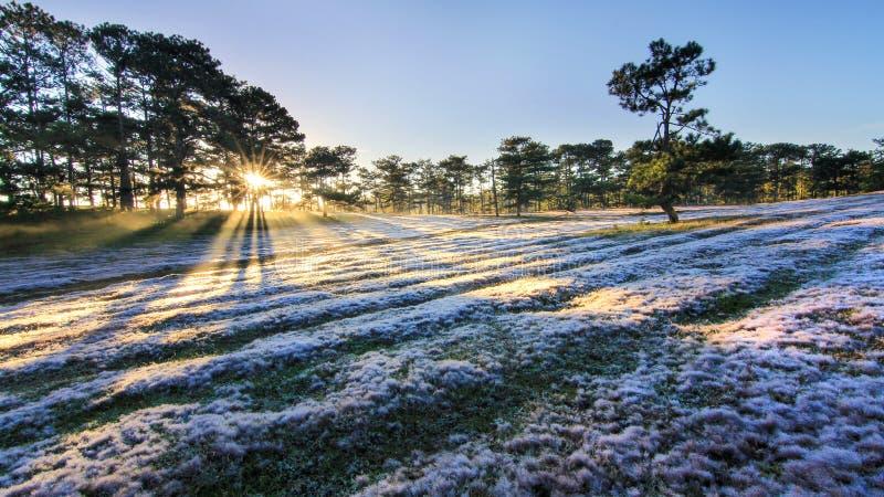 Rött gräs DaLat royaltyfri fotografi