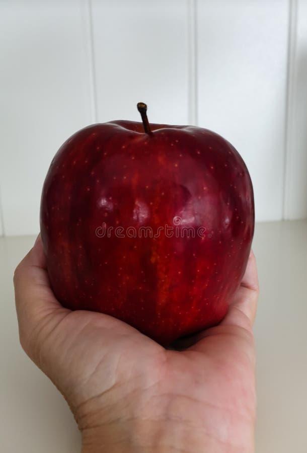 Rött - läckert äpple som rymms i en hand arkivbilder