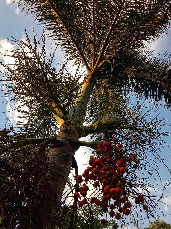 Rött mutterlagerträd arkivbild