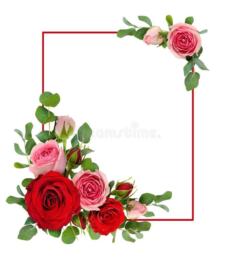 Rött och rosa steg blommor med eukalyptussidor i en hörnarr vektor illustrationer