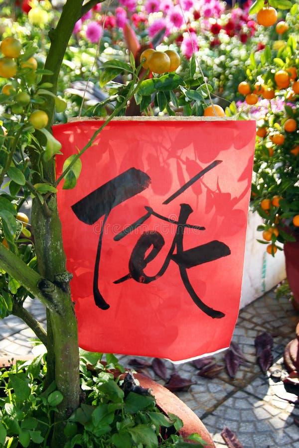Rött papper med inskriften översatta Tet - nytt år på ett tangerinträd för beröm av det vietnamesiska nya året arkivfoton